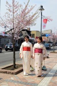 桜祭り着付け1